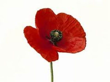 Learn the Meanings of  Poppy Flower